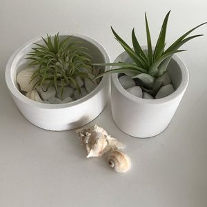 Set of 2 Air Plants in White Concrete Planters